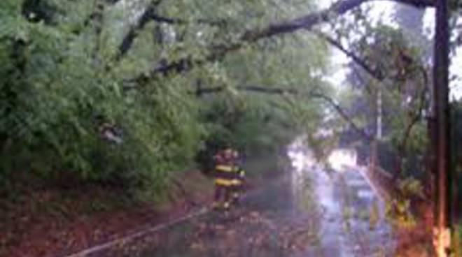 taglio albero pompieri