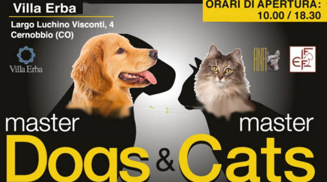 master dogs intervista