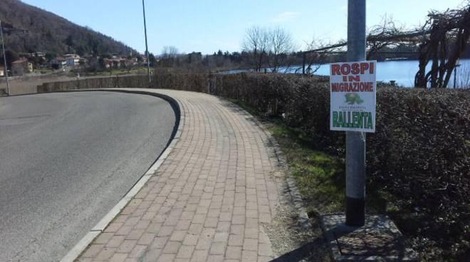 cartello rospi strada