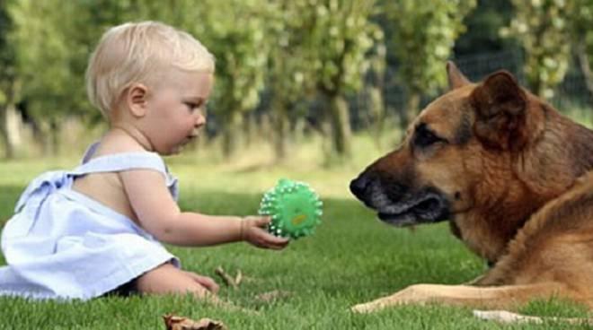cop cani