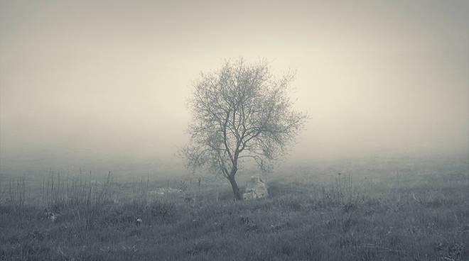 mistery_tree_by_leenik