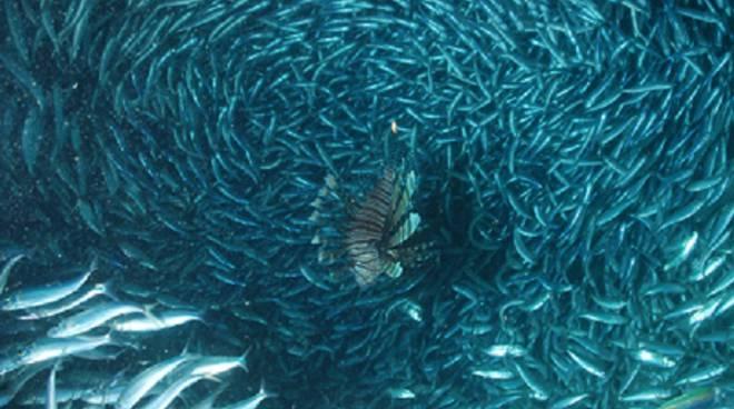 PLANETE OCEAN