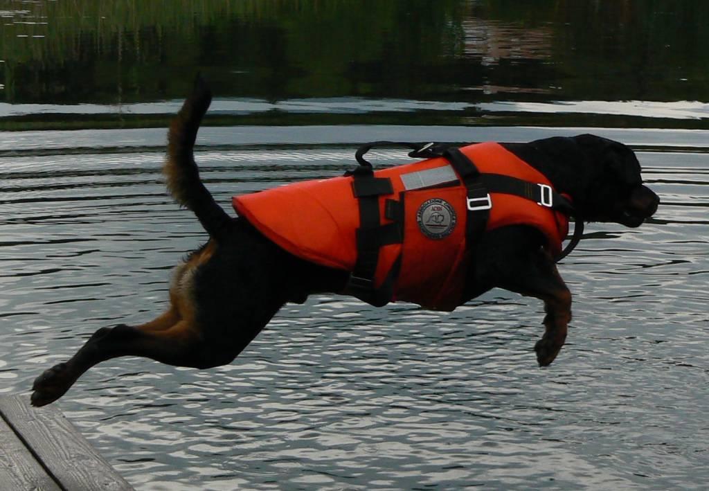 cani soccorso 0