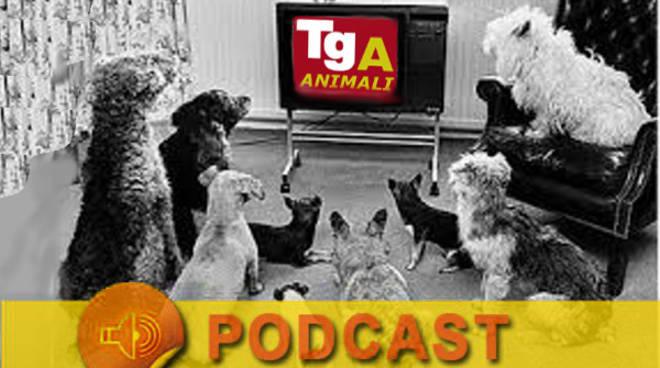 ANIMALI - animal news.ipg