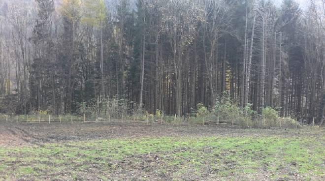 foresta di terz'alpe canzo