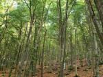 bosco ersaf