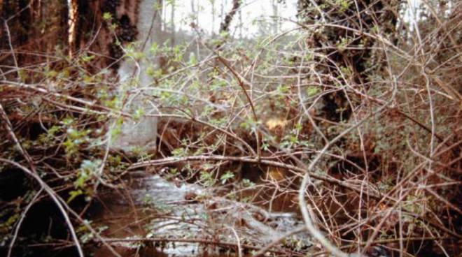 fiume con rovi