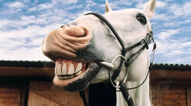 horse-smile-4