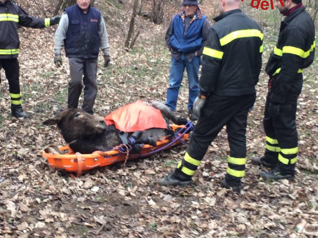 pompieri recuperano asilo bosco