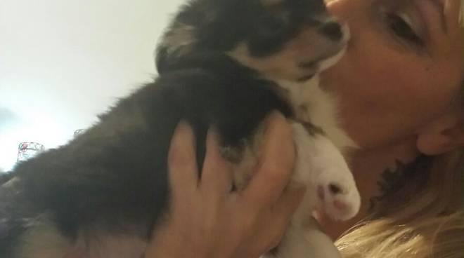 silvava e cucciolo cane