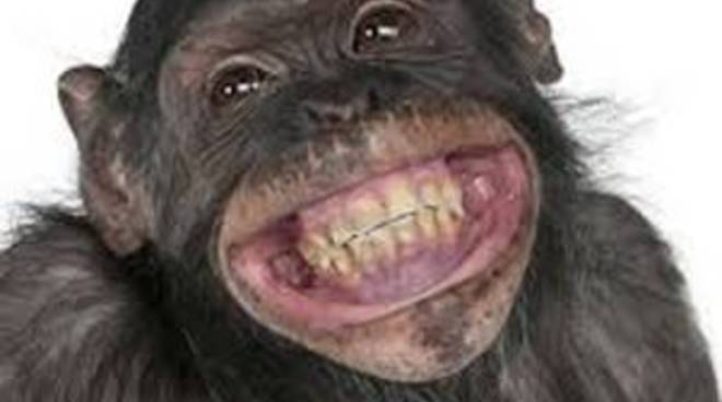 scimmia ride