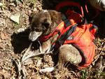 cane nel burrone recuperato