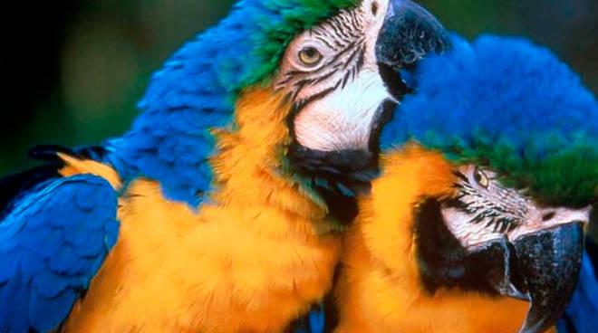 pappagalli esotivi
