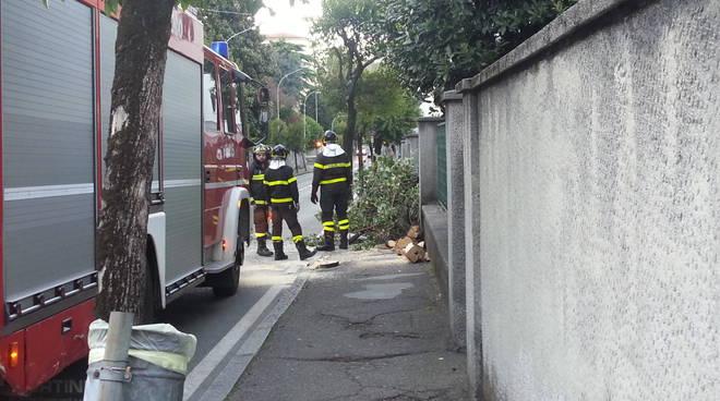 taglio pianta pompieri como vento