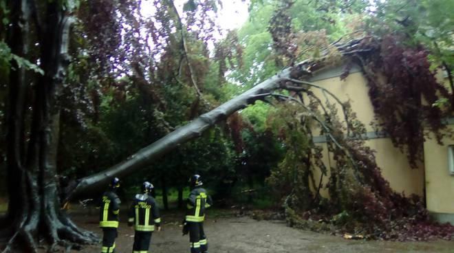 albero su scuola lomazzo pompieri