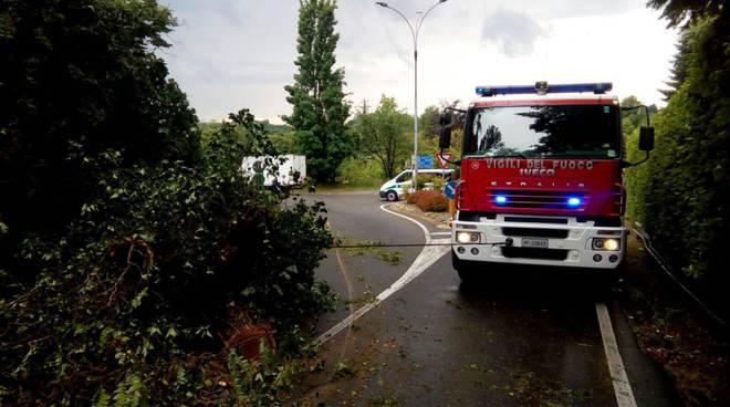 pompieri e albero caduto