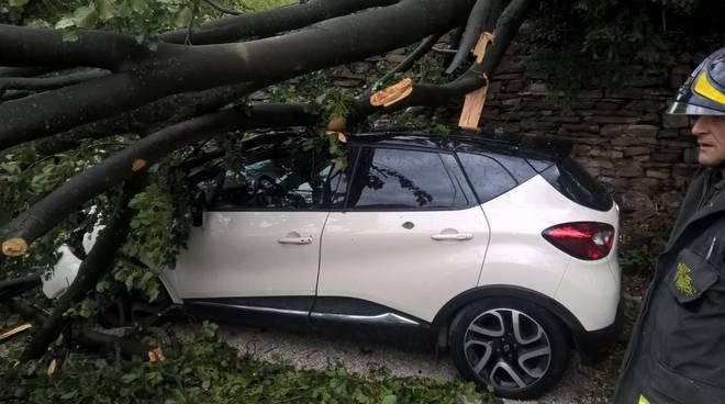 albero su auto cernobbio