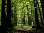 bosco generico