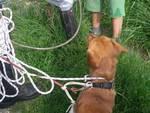 cane salvato ponte dei bottini