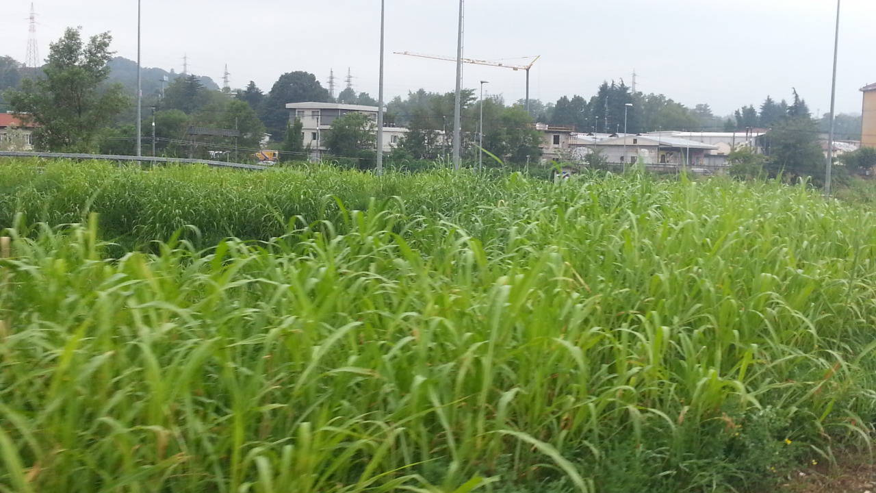 erba alta tangenziale como e grandate
