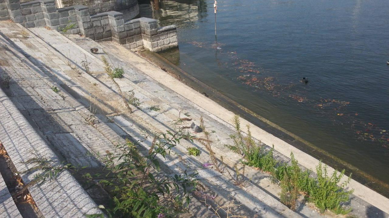 anatre nel lago di como, moria improvvisa per il botulino