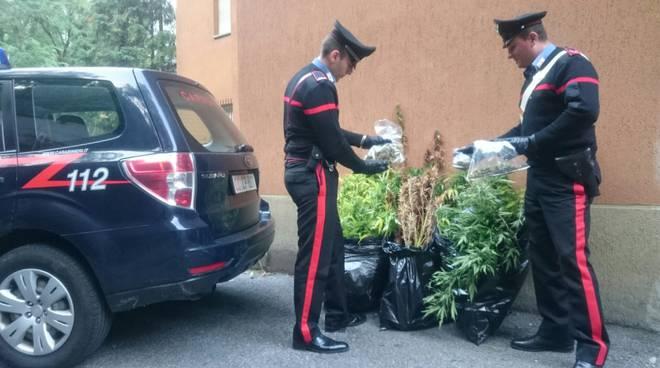 carabinieri menaggio piantine canapa