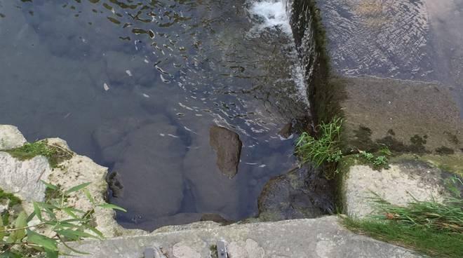 cosia in secca anomala, muoiono tanti pesci
