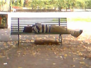 foto notizia padrone cane panchina