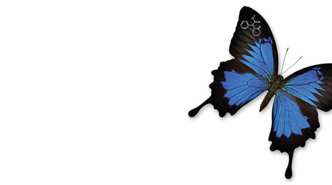 anche i bruchi volano dell'agnola