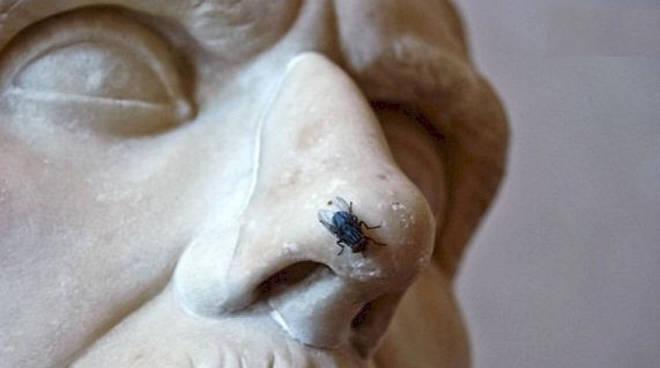 la mosca san teodoro