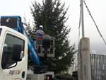 Vischio per il bacio di Natale e nuovo albero per la Città dei Balocchi