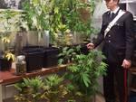 coltivazione marijuana a casa arresto carabinieri lomazzo