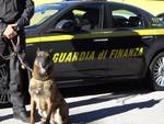 Sequestro cocaina brogeda bus turistico e cane finanza
