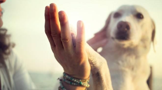 Vivere con gli animali - psicoterapia