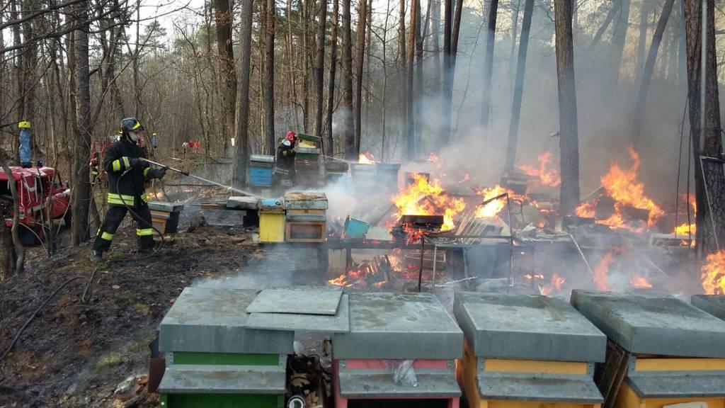 Incendiate le arnie del Parco Pineta di Appiano Gentile