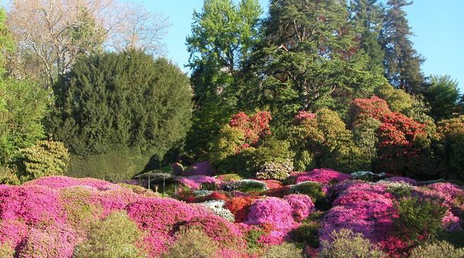 villa carlotta fiori