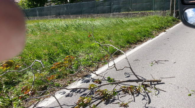 albero abbattuto da vento strada asnago cantu'