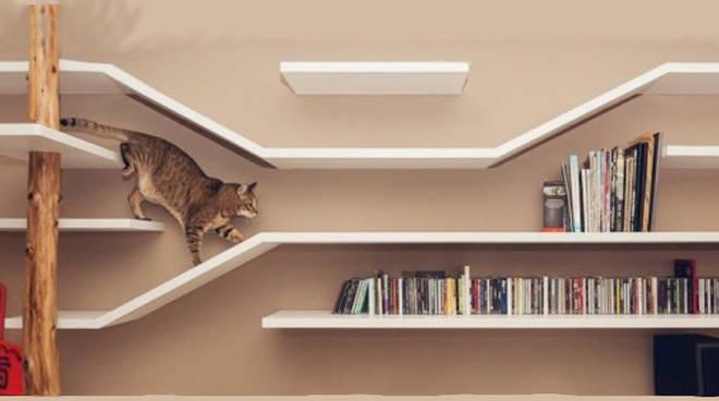 Vivere animali - casa dei gatti