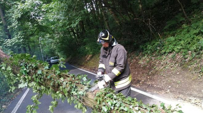 alberi caduti per vento e pioggia pompieri