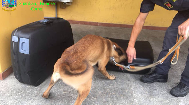 cane finanza arresto droga su pullman brogeda