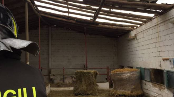 cedimento tetto stalla veniano via milanese