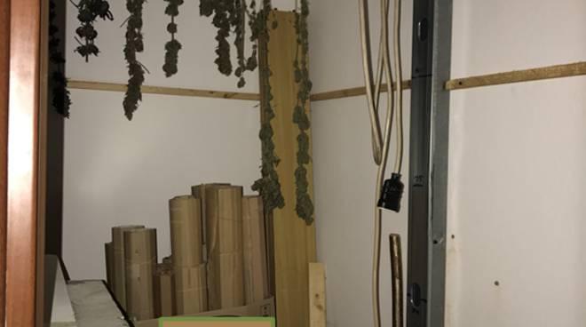 serra artigianale confezionamento marijuana