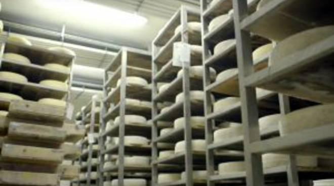 valsassina valle formaggi