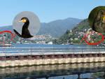 cormorani lungolago
