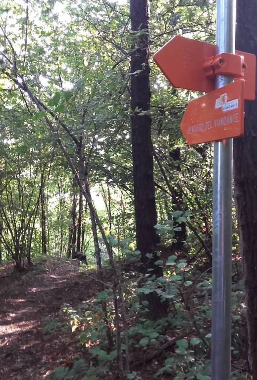 sentiero del viandante inaugurazione tratto delebio