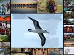 albatros cantù