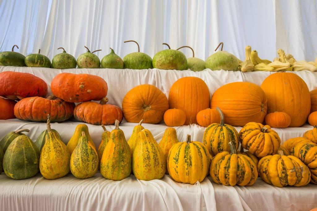fondazione minoprio halloween