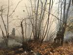 Incendio a veleso, pompieri nel bosco per domare il rogo