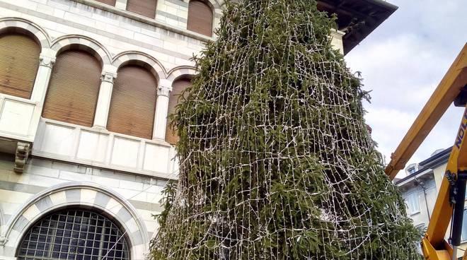 grande albero di piazza grimoldi a como balocchi 2017