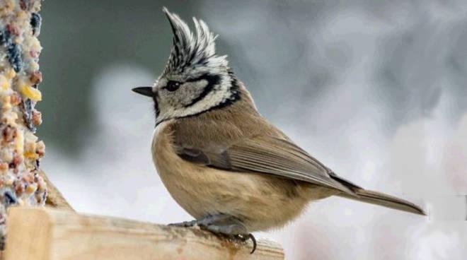 lipu freddo uccelli